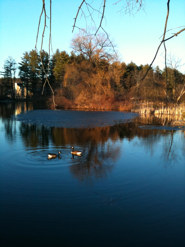 lake with geese