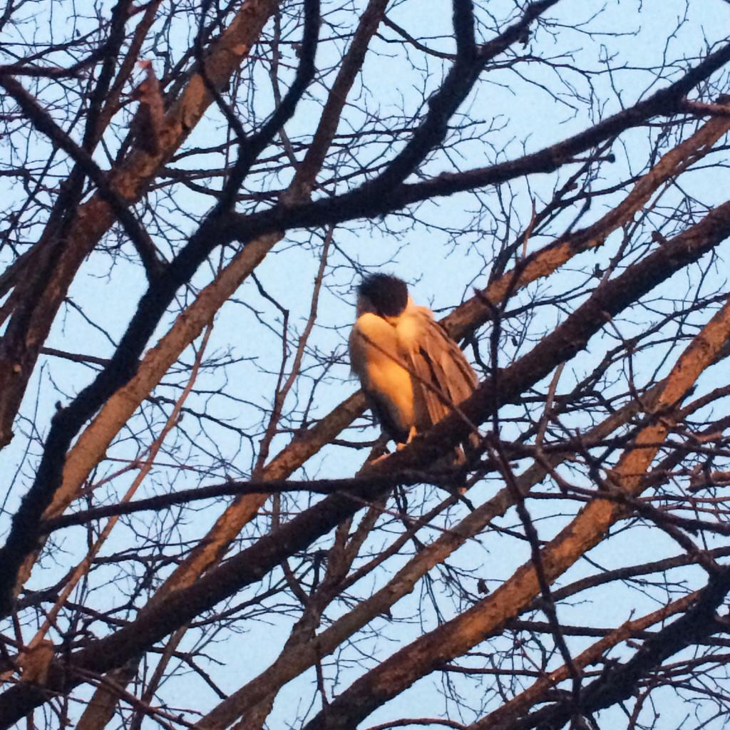 bird-in-tree