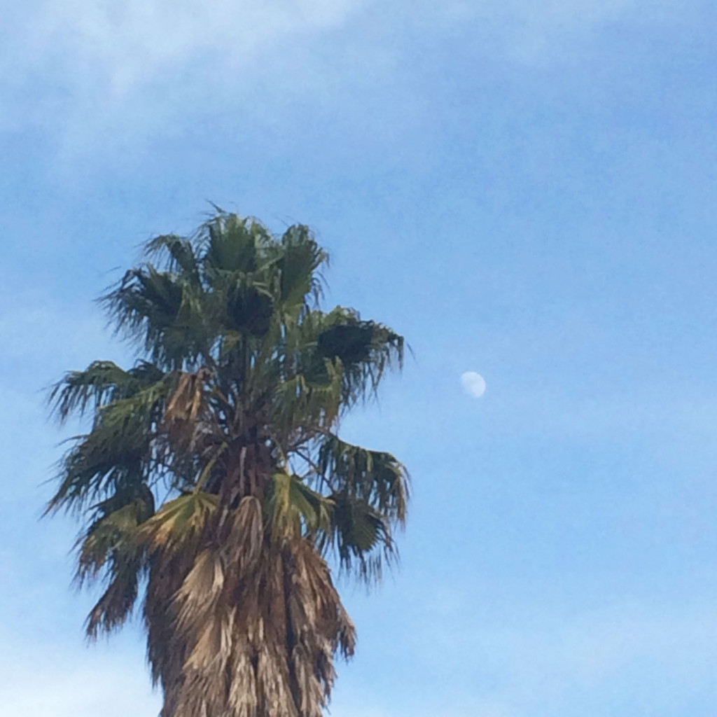 palm-tree-and-moon
